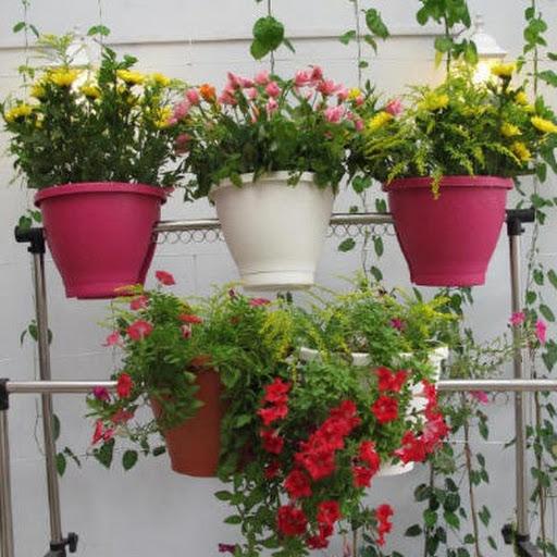 cách chọn chậu trồng rau
