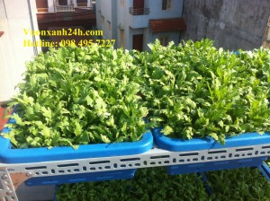 Giàn trồng rau sạch tại nhà: ( 2 tầng, 10 chậu)