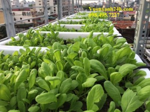 Giàn trồng rau sạch 2 tầng, 12 chậu màu trắng(68*43*16)