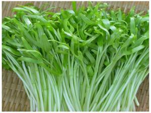 Hạt giống rau mầm rau muống 100g