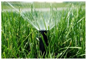 Hệ thống tưới nước phun mưa.