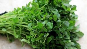 Lợi ích chữa bệnh thần kỳ của rau cải xoong