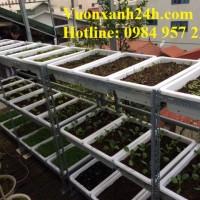 tự trồng rau sạch tại nhà