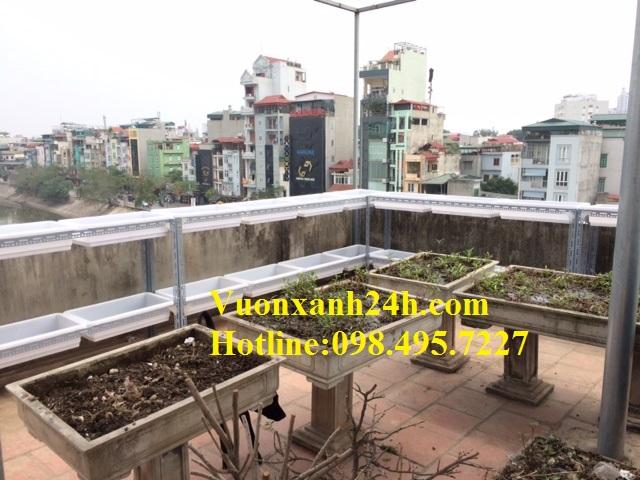 Giàn rau sạch tại Thượng Đình