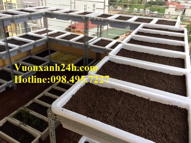 Giàn trồng rau sạch sân thượng Văn Quán
