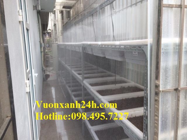 Vườn trồng rau sạch tại khách sạn Mường Thanh