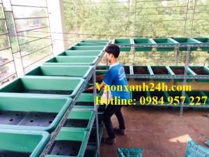 Giàn rau sân thượng tại Nguyễn Khoái