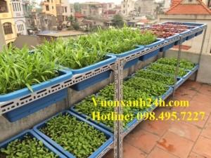 Giàn trồng rau sạch chậu xanh(68*43*16)