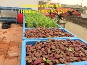 Vườn trồng rau sạch tại Giáp Nhị