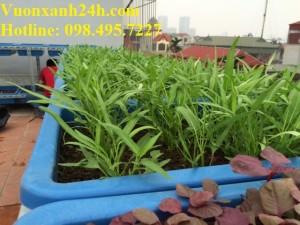 Mẹo nhỏ giúp vườn rau nhanh lớn và không bị sâu bệnh