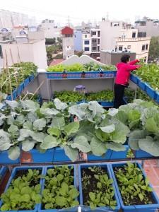 Giàn trồng rau sạch 2 tầng Xanh 18 chậu(68*43*16)