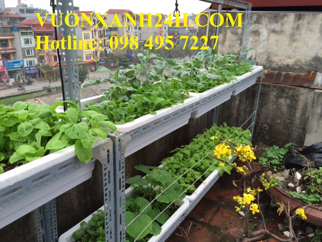 Thăm lại giàn rau sạch tại Thượng Đình