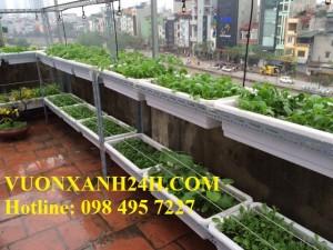 Thăm lại Vườn rau xanh mướt tại Thượng Đình