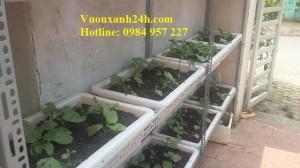 Vườn rau sạch tại Lai Châu