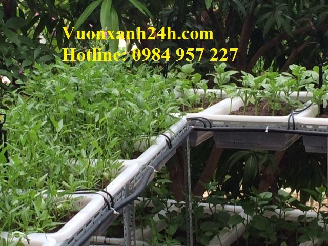 Vườn rau sạch tại Làng Việt Kiều Châu Âu