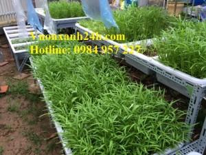 Quay lại vườn rau sạch tại Tô Ngọc Vân sau 1 tháng thi công