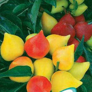 Hạt giống ớt ngũ sắc trái đào tiên