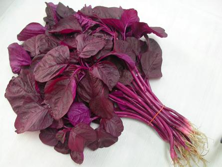 Hạt giống rau dền đỏ lá liễu