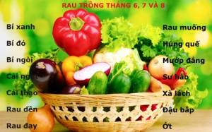 """14 loại rau dễ trồng tháng 6, 7, 8 """"ăn hoài không hết"""""""