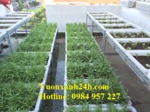 Khám phá vườn trồng rau đáng mơ ước trên sân thượng tại An Dương