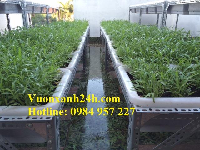 Vườn trồng rau sạch tại An Dương