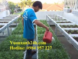 Vườn trồng rau đáng mơ ước trên sân thượng tại An Dương
