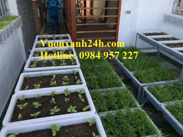 Nhân Viên bên Vuonxanh24h.com đang chăm sóc vườn rau sạch cho khách hàng.