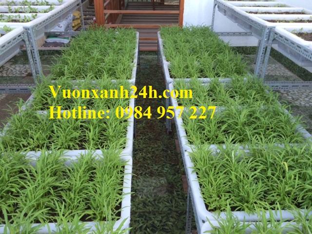 Vườn trồng rau sạch tại An Dương -