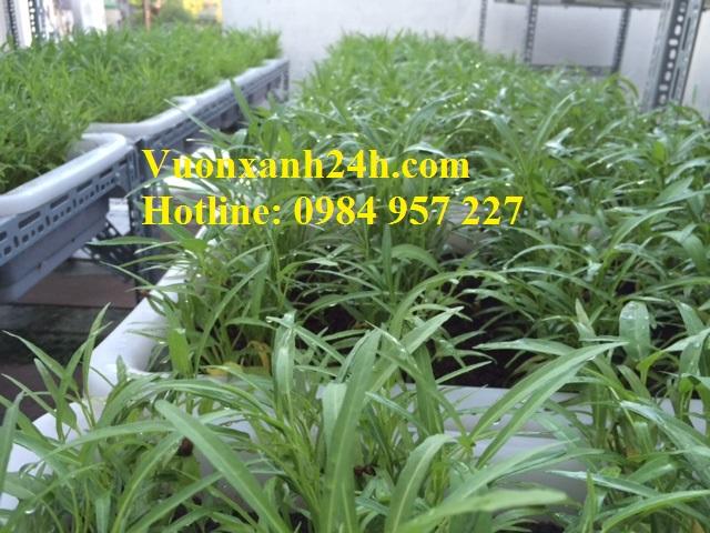 Vườn trồng rau sạch tại An Dương - Vuonxanh24h.com