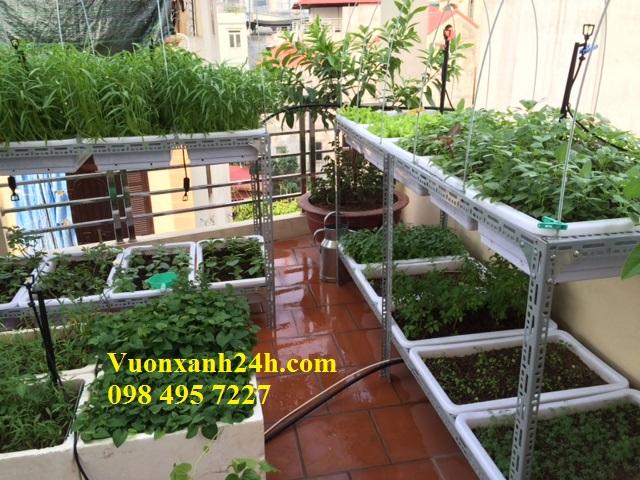 Vườn Rau Sạch Sân Thượng - Giải Pháp hạ nhiệt ngày nắng