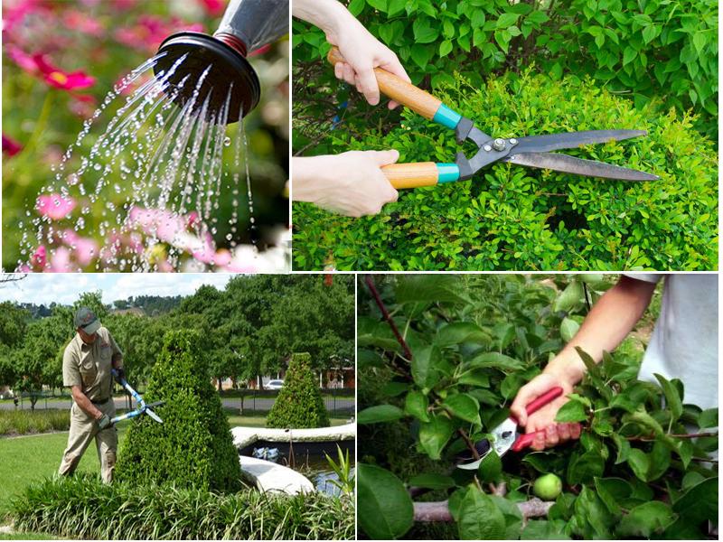 dịch vụ chăm sóc vườn rau