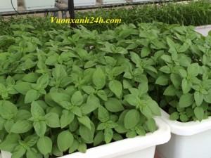 Giàn trồng rau sạch chậu nhỏ (48x33x16)