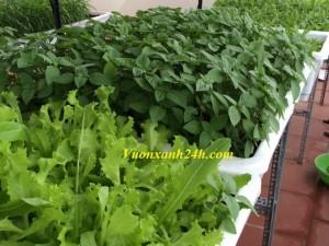 Giàn trồng rau sạch tại nhà: ( 2 tầng, 28 chậu)