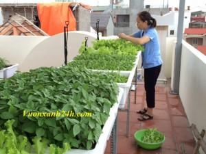 """Nông dân """"Phố"""" tự trồng rau sạch"""