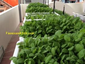 Giàn trồng rau 3 tầng, 30 chậu màu trắng(67*40*16)