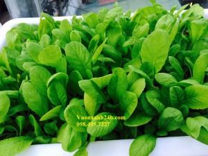 Giàn trồng rau sạch tại nhà: (3 tầng, 18 chậu)