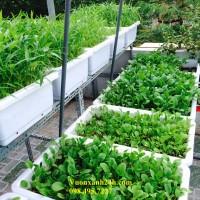 Vườn Rau Sân Thượng tại 29 Khương Hạ