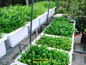 Giàn trồng rau sạch tại nhà chậu trắng(67*40*16)