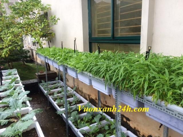 Vườn rau sạch tại Đốc Ngữ
