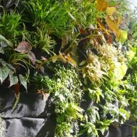túi vải vườn xanh 24h
