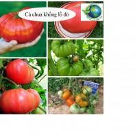 Cà chua khổng lồ