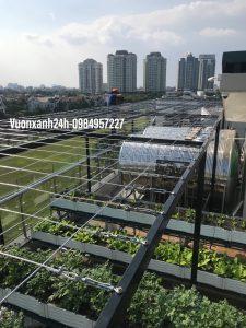 Cách làm giàn trồng cây leo trên sân thượng