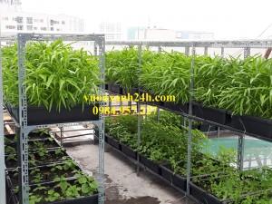 Giàn trồng rau sạch chậu nhỏ màu đen (48*34*16)