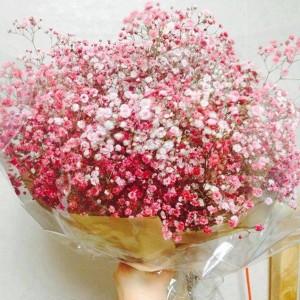 Hạt giống hoa Baby hồng.