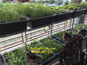 Giàn trồng rau sạch màu đen 2 tầng, 8 chậu(68*43*16)