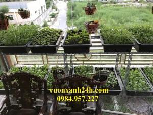 Ngạc nhiên với Vườn Rau Sạch tại Phạm Văn Đồng sau 15 ngày.