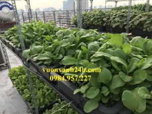 Bí quyết lựa chọn đất trồng rau sạch