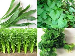 Cách trồng rau gia vị đơn giản tại nhà