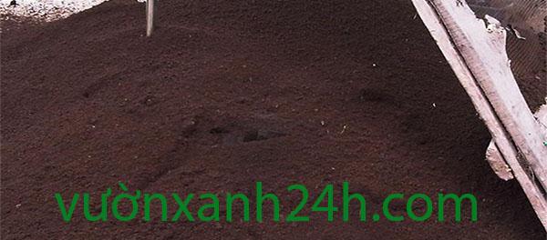 phan-trun-que-600x264