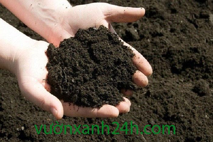 Phân trùn quế nguyên chất